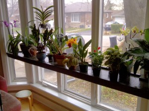 plant shelf 1