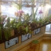 plant shelf 4 ht 480