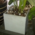 small planter 1