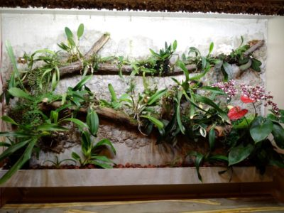 Planters and Living Walls